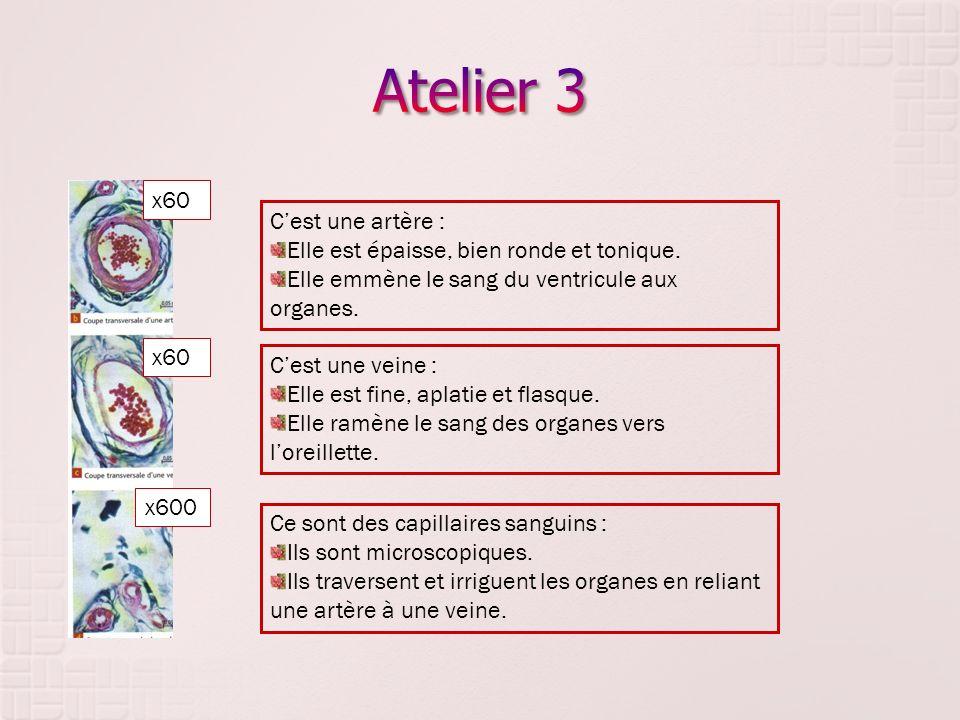 Atelier 3 x60 C'est une artère :