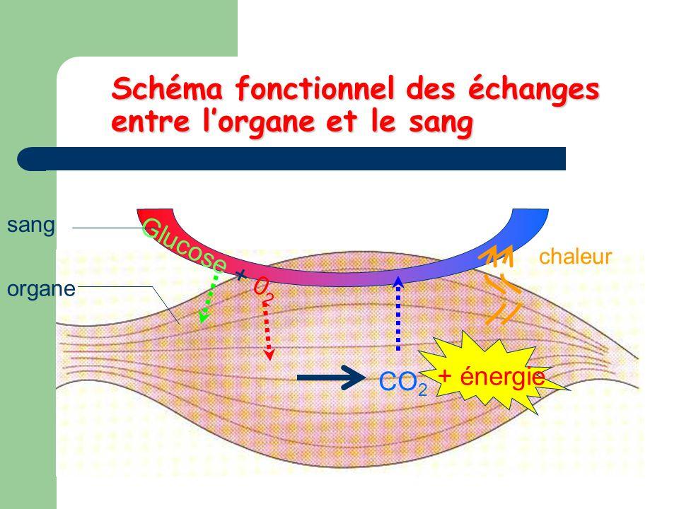 Schéma fonctionnel des échanges entre l'organe et le sang