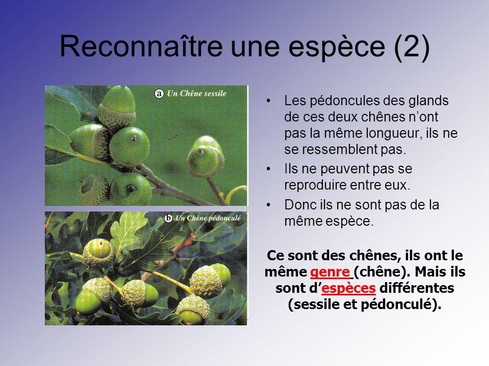 Reconnaître une espèce (2)