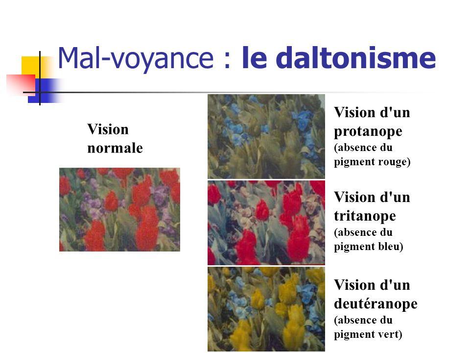 Mal-voyance : le daltonisme