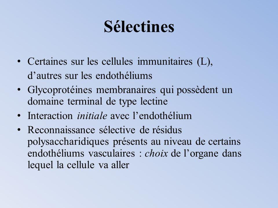 Sélectines Certaines sur les cellules immunitaires (L),