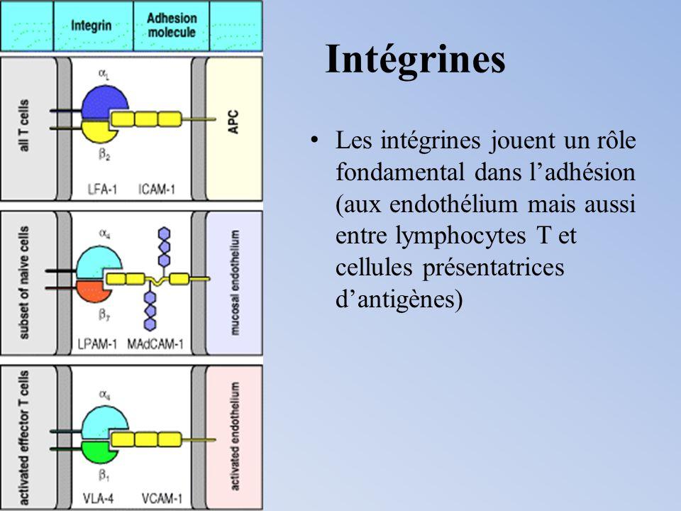 Intégrines