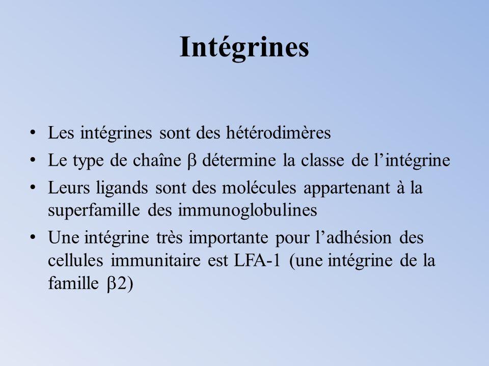Intégrines Les intégrines sont des hétérodimères