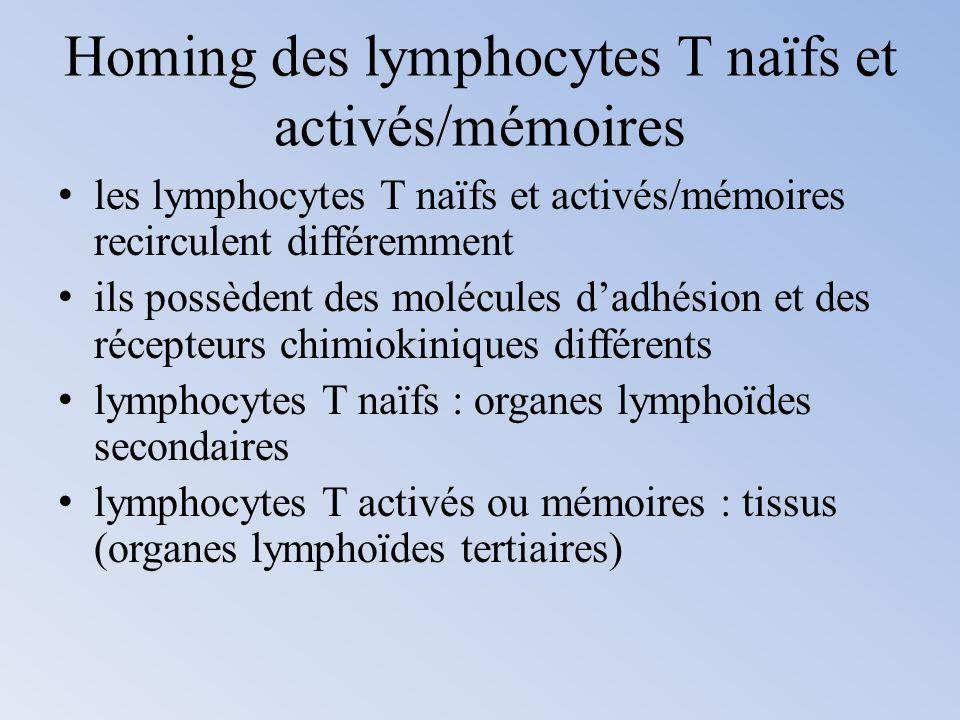 Homing des lymphocytes T naïfs et activés/mémoires