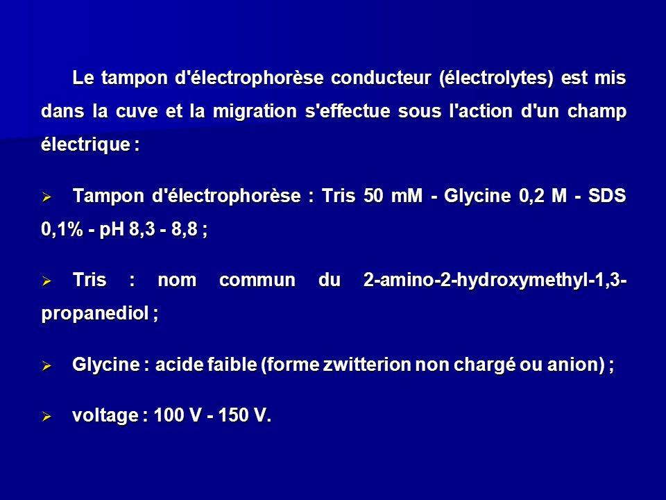 Le tampon d électrophorèse conducteur (électrolytes) est mis dans la cuve et la migration s effectue sous l action d un champ électrique :
