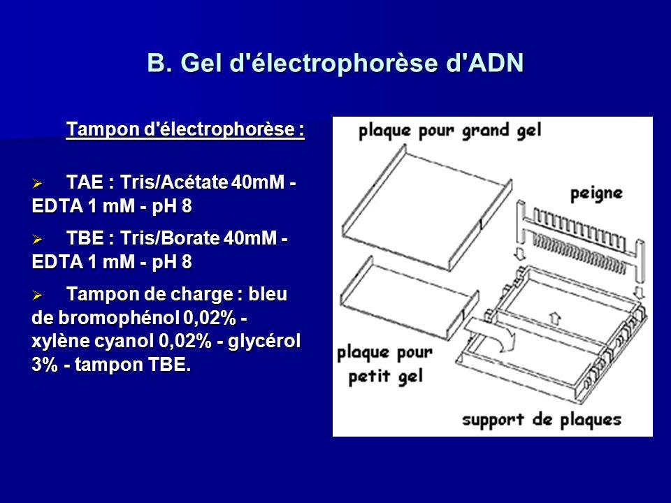 B. Gel d électrophorèse d ADN