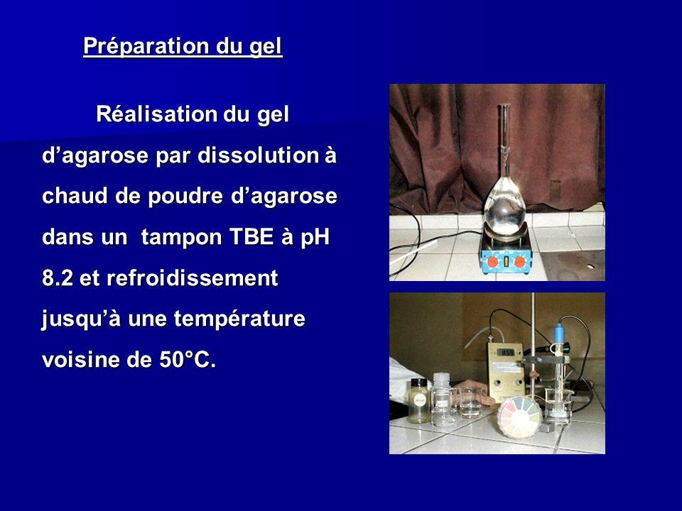 Préparation du gel Réalisation du gel d'agarose par dissolution à chaud de poudre d'agarose dans un tampon TBE à pH 8.2 et refroidissement jusqu'à une température voisine de 50°C.