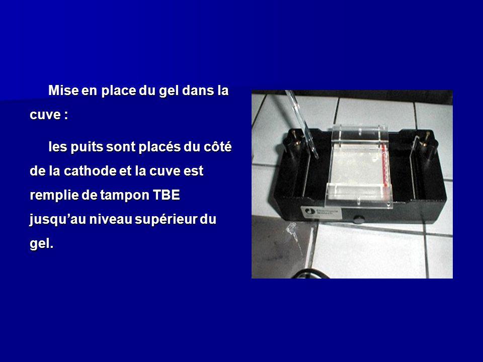 Mise en place du gel dans la cuve : les puits sont placés du côté de la cathode et la cuve est remplie de tampon TBE jusqu'au niveau supérieur du gel.