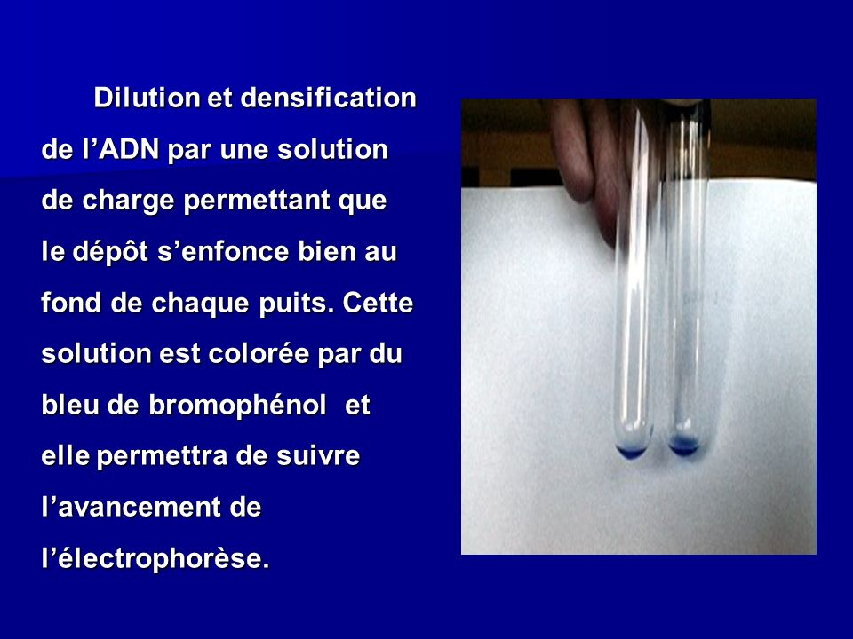 Dilution et densification de l'ADN par une solution de charge permettant que le dépôt s'enfonce bien au fond de chaque puits.
