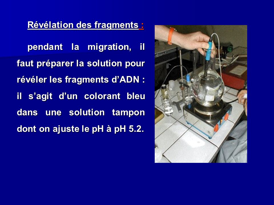 Révélation des fragments : pendant la migration, il faut préparer la solution pour révéler les fragments d'ADN : il s'agit d'un colorant bleu dans une solution tampon dont on ajuste le pH à pH 5.2.