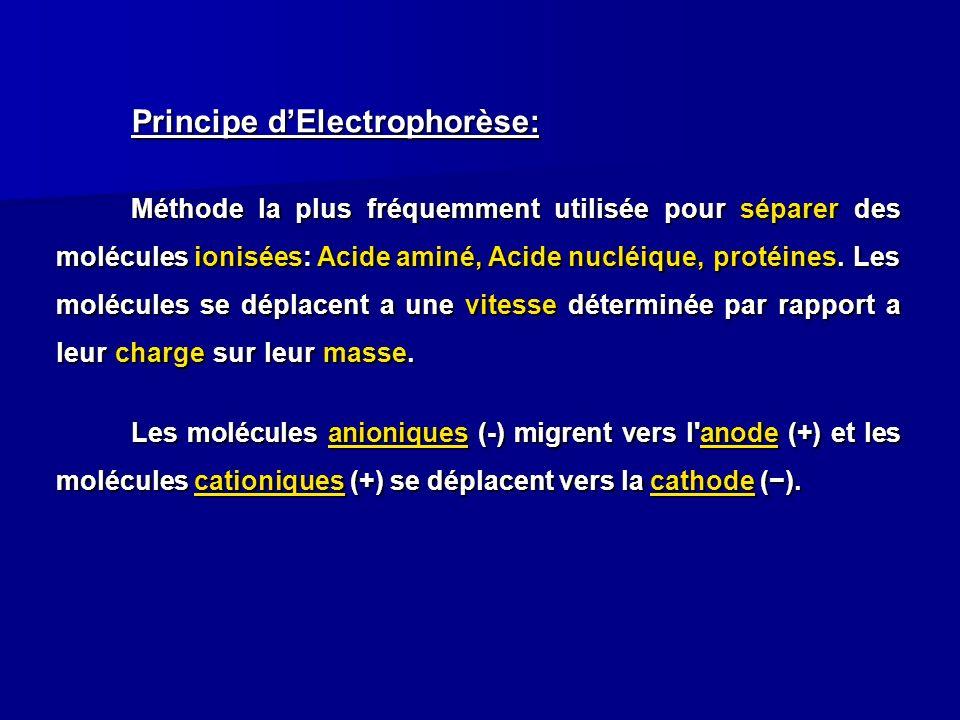 Principe d'Electrophorèse: