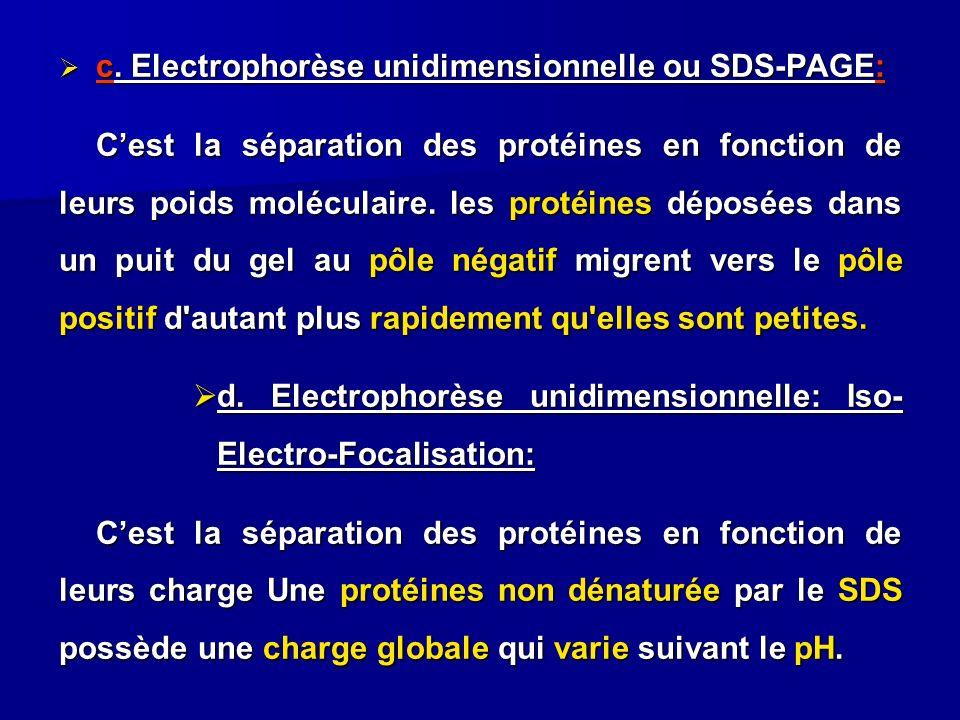 c. Electrophorèse unidimensionnelle ou SDS-PAGE: