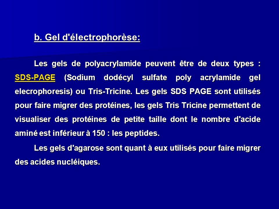 b. Gel d électrophorèse: