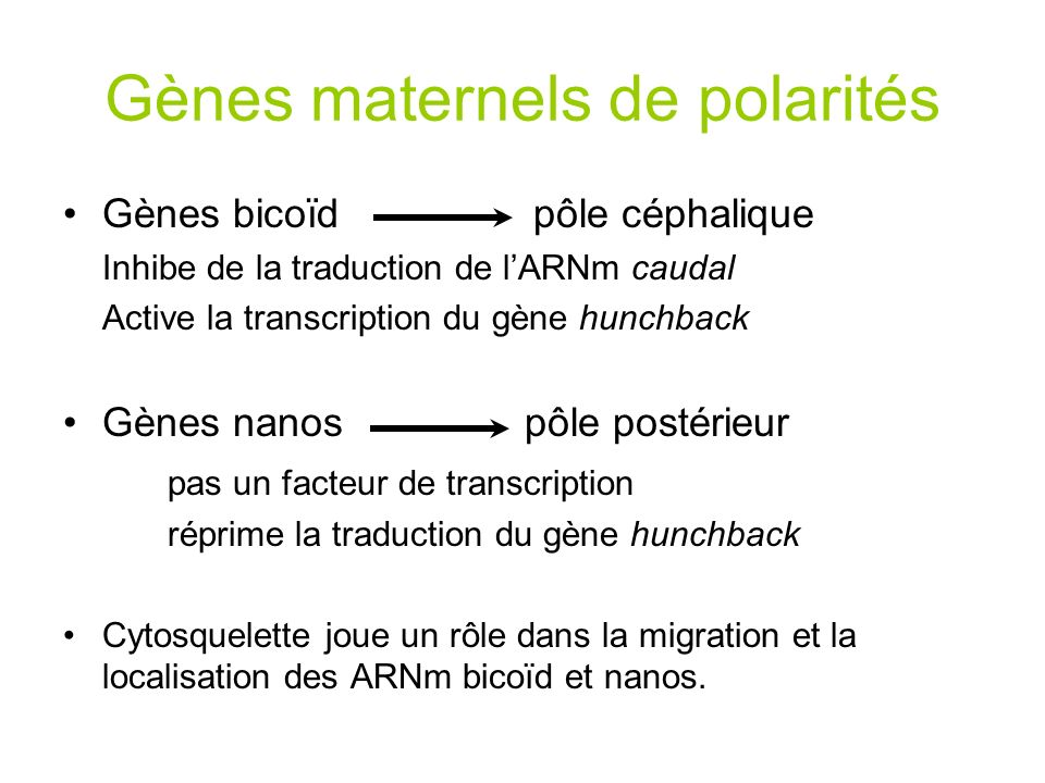 Gènes maternels de polarités