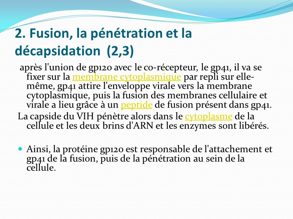 2. Fusion, la pénétration et la décapsidation (2,3)