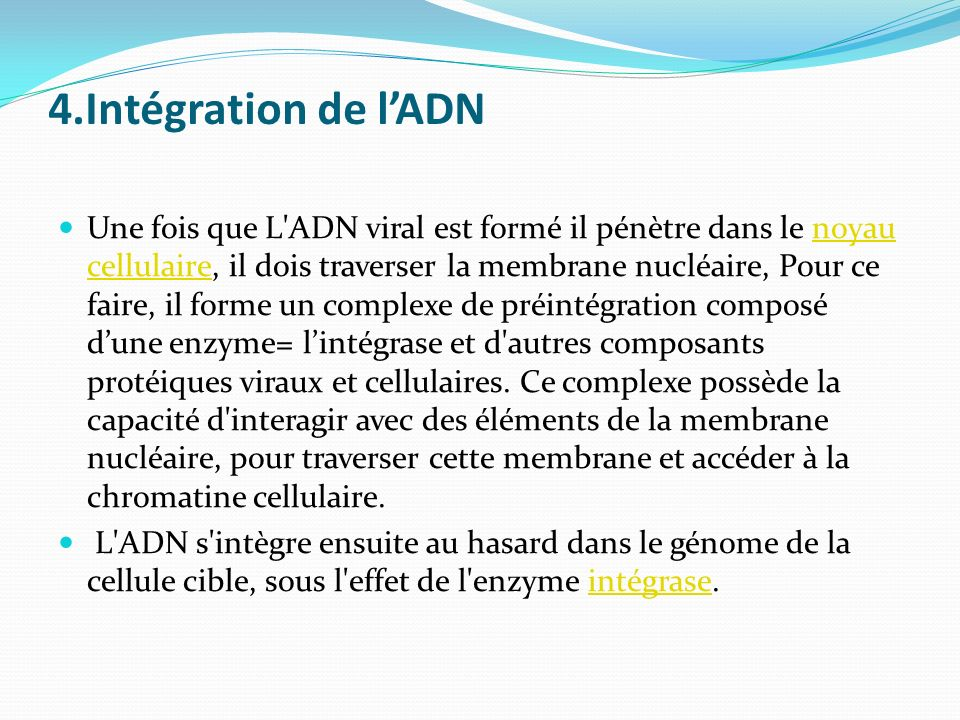 4.Intégration de l'ADN