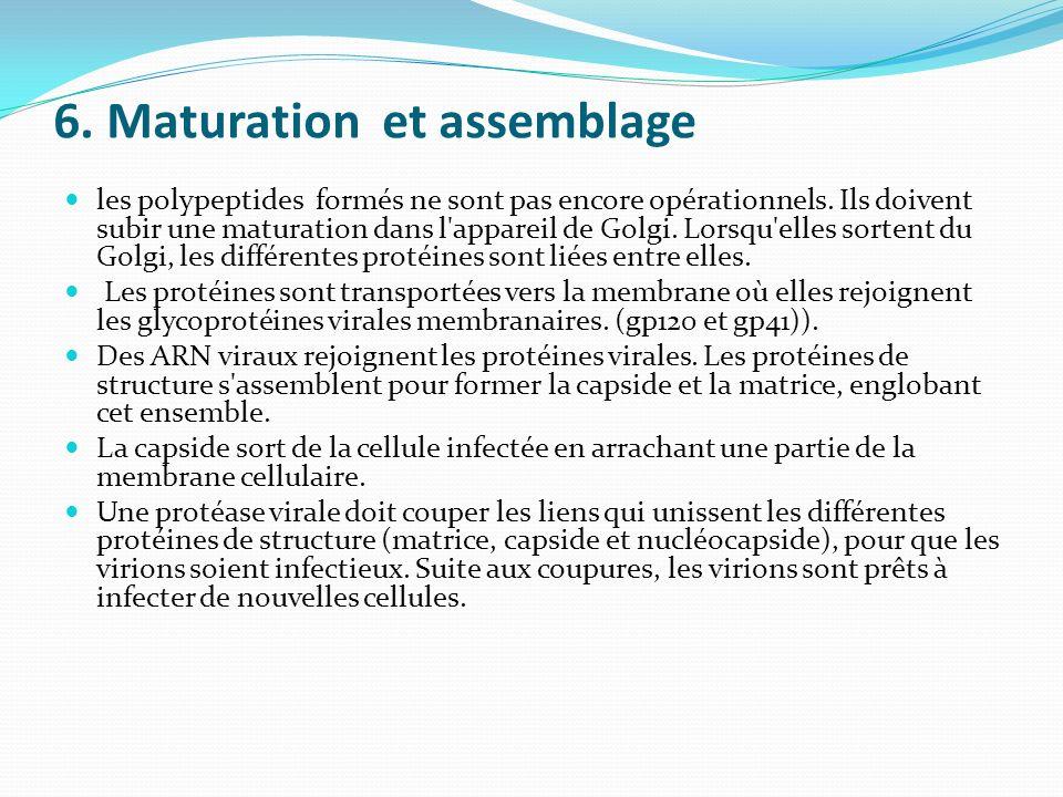 6. Maturation et assemblage