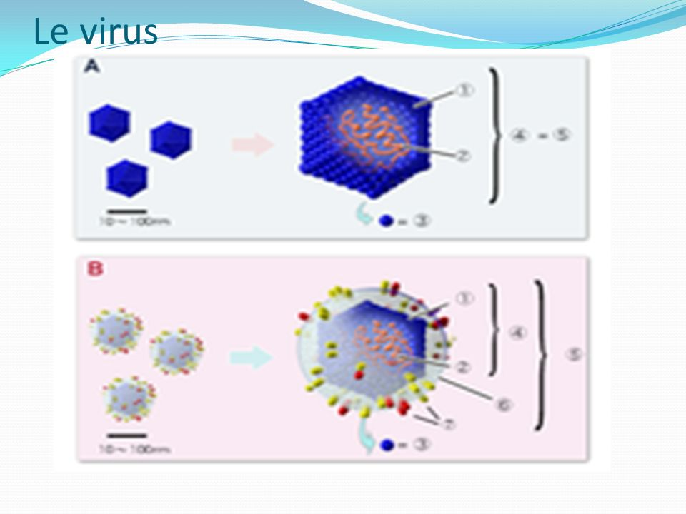 Le virus