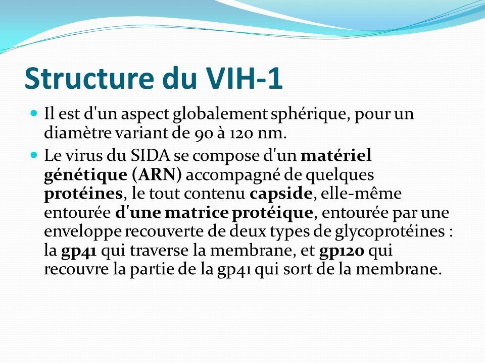 Structure du VIH-1 Il est d un aspect globalement sphérique, pour un diamètre variant de 90 à 120 nm.