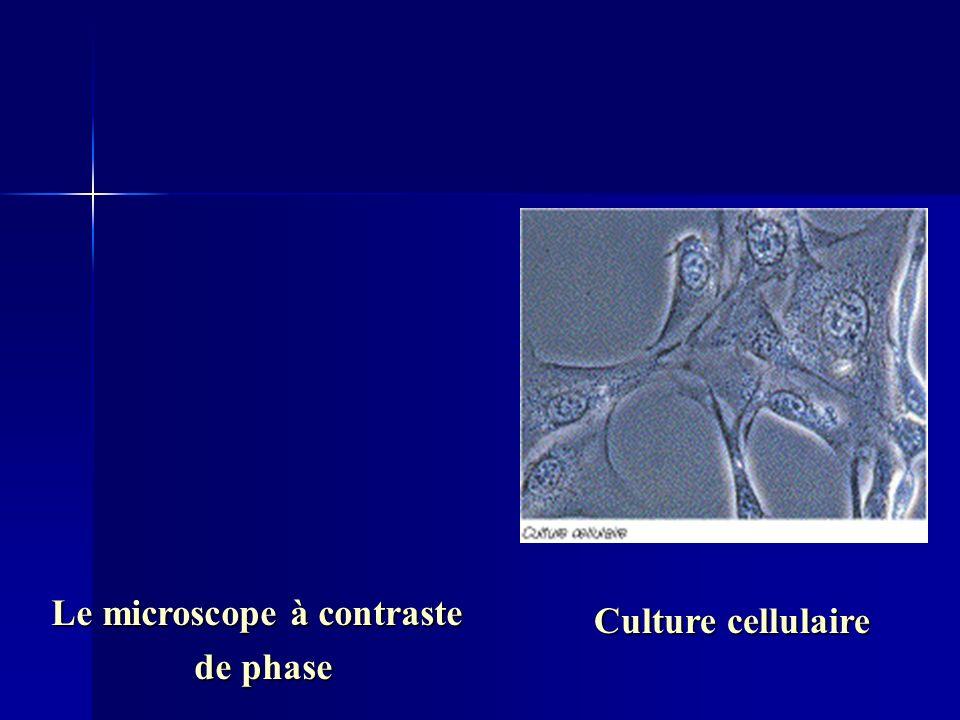 Le microscope à contraste