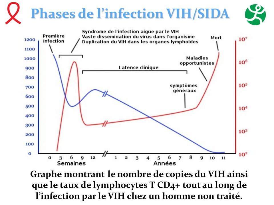 Phases de l'infection VIH/SIDA