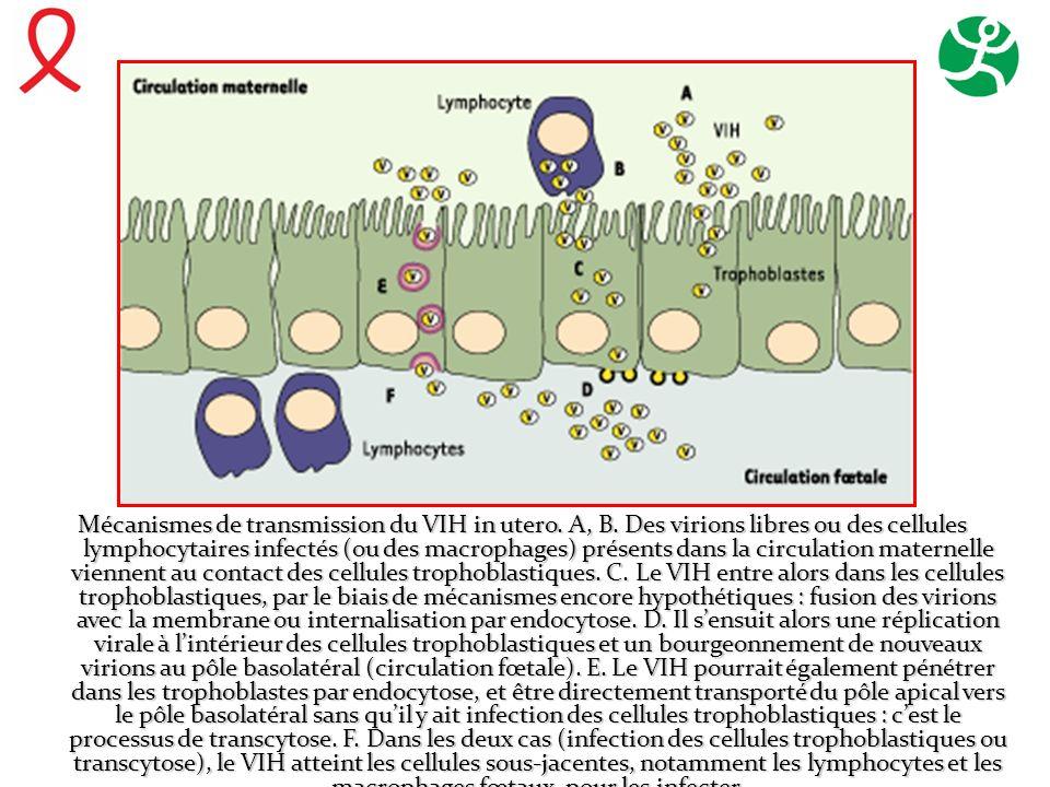 Mécanismes de transmission du VIH in utero. A, B