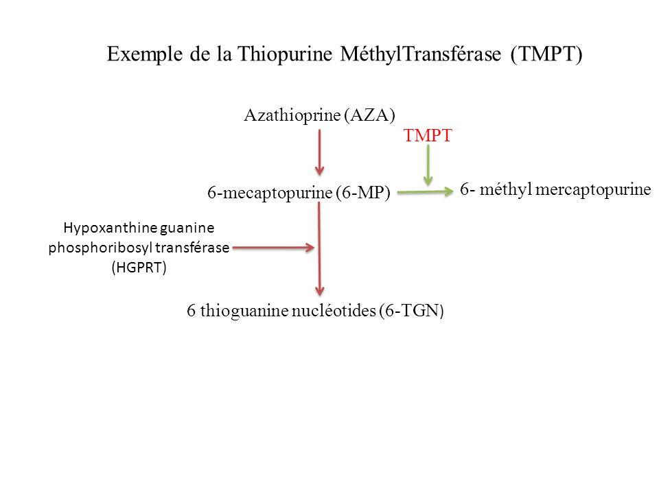 Exemple de la Thiopurine MéthylTransférase (TMPT)