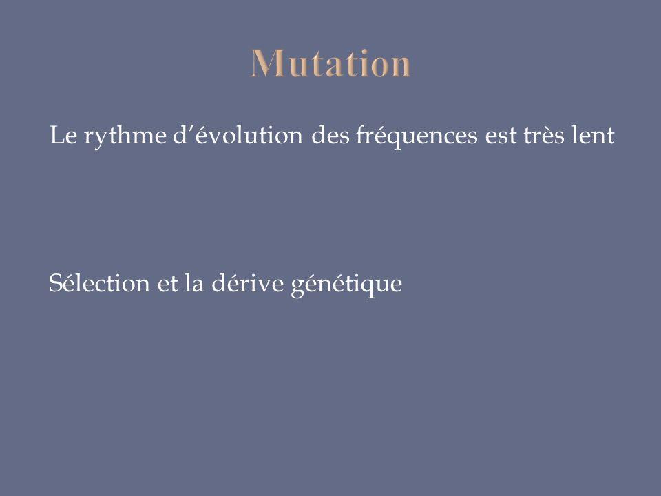 Mutation Le rythme d'évolution des fréquences est très lent Sélection et la dérive génétique