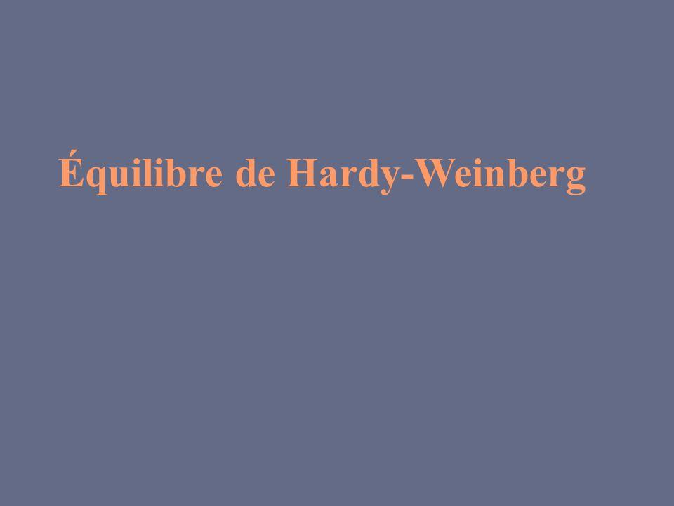 Équilibre de Hardy-Weinberg