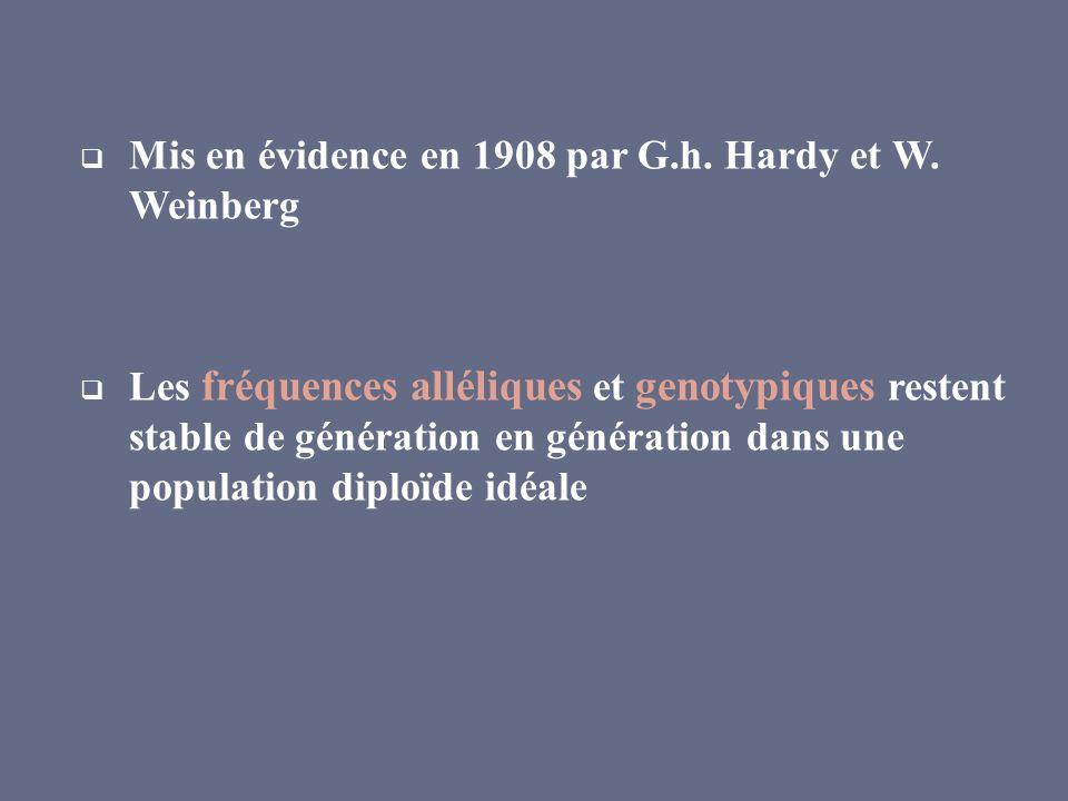 Mis en évidence en 1908 par G.h. Hardy et W. Weinberg