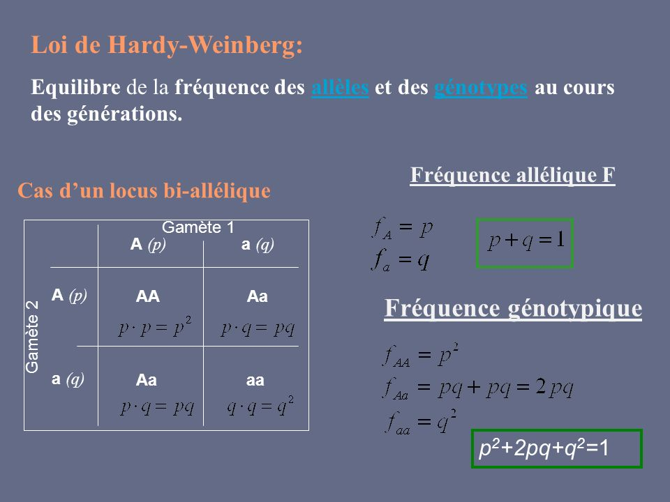Loi de Hardy-Weinberg: