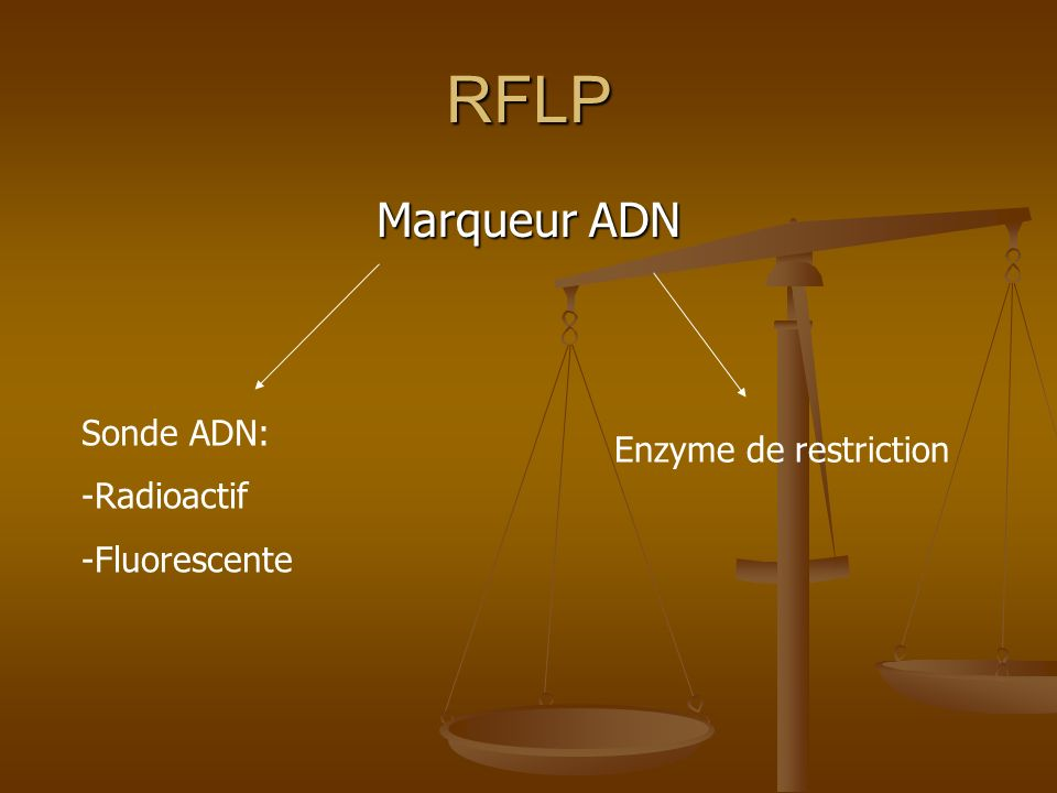 RFLP Marqueur ADN Sonde ADN: Enzyme de restriction Radioactif
