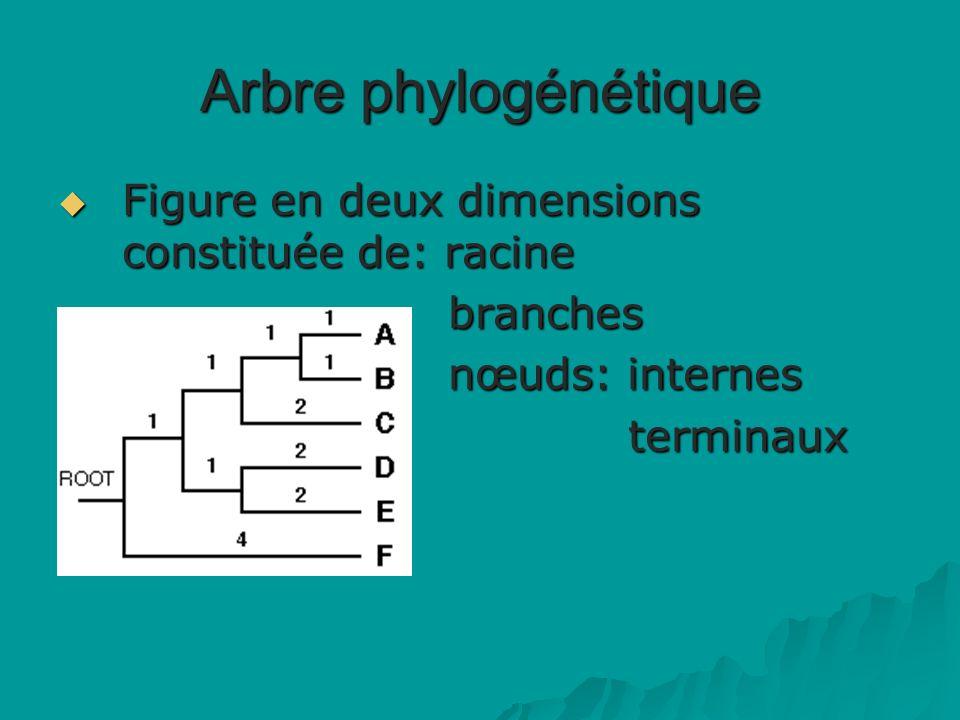 Arbre phylogénétique Figure en deux dimensions constituée de: racine