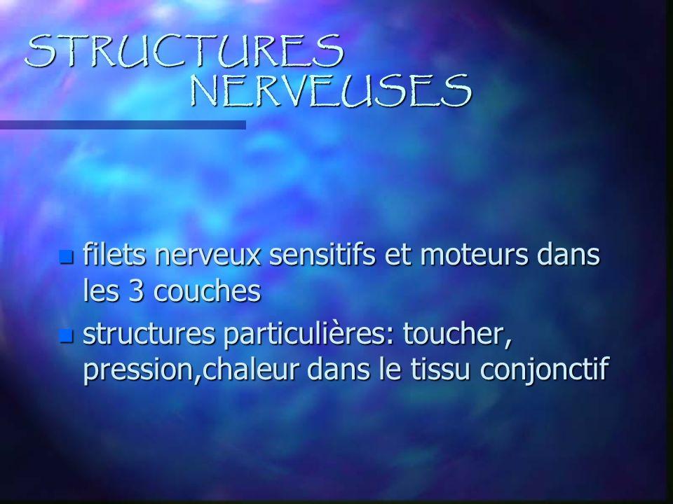 STRUCTURES NERVEUSES filets nerveux sensitifs et moteurs dans les 3 couches.