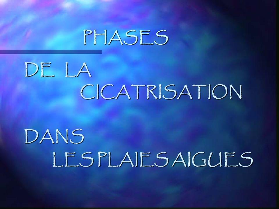 PHASES DE LA CICATRISATION DANS LES PLAIES AIGUES