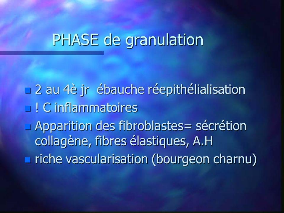 PHASE de granulation 2 au 4è jr ébauche réepithélialisation