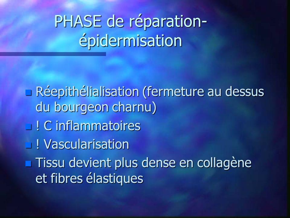 PHASE de réparation-épidermisation