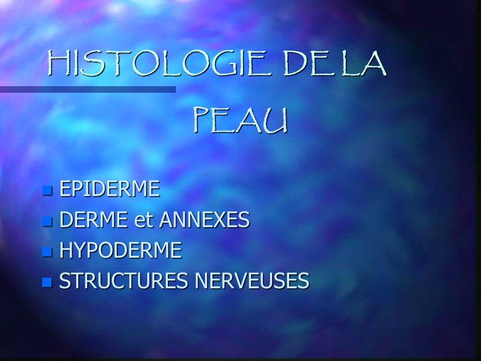 HISTOLOGIE DE LA PEAU EPIDERME DERME et ANNEXES HYPODERME