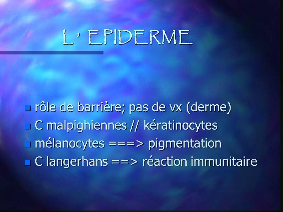 L ' EPIDERME rôle de barrière; pas de vx (derme)