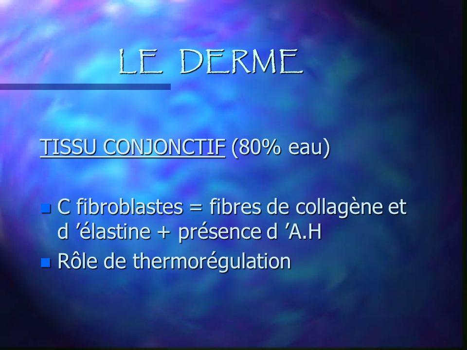 LE DERME TISSU CONJONCTIF (80% eau)