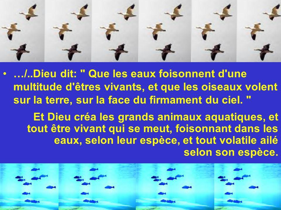 …/..Dieu dit: Que les eaux foisonnent d une multitude d êtres vivants, et que les oiseaux volent sur la terre, sur la face du firmament du ciel.