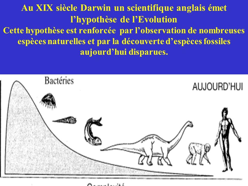 Au XIX siècle Darwin un scientifique anglais émet l'hypothèse de l'Evolution Cette hypothèse est renforcée par l'observation de nombreuses espèces naturelles et par la découverte d'espèces fossiles aujourd'hui disparues.