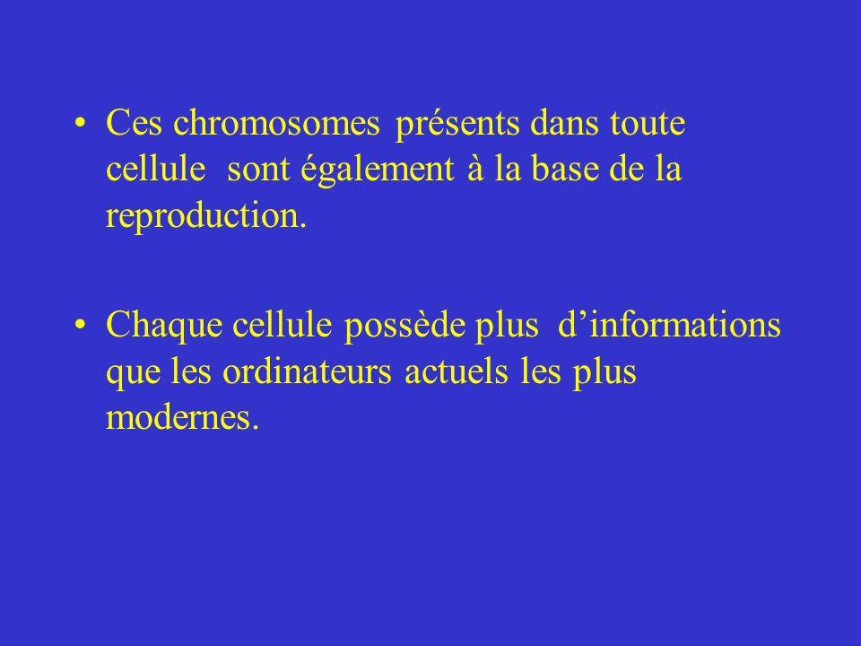 Ces chromosomes présents dans toute cellule sont également à la base de la reproduction.