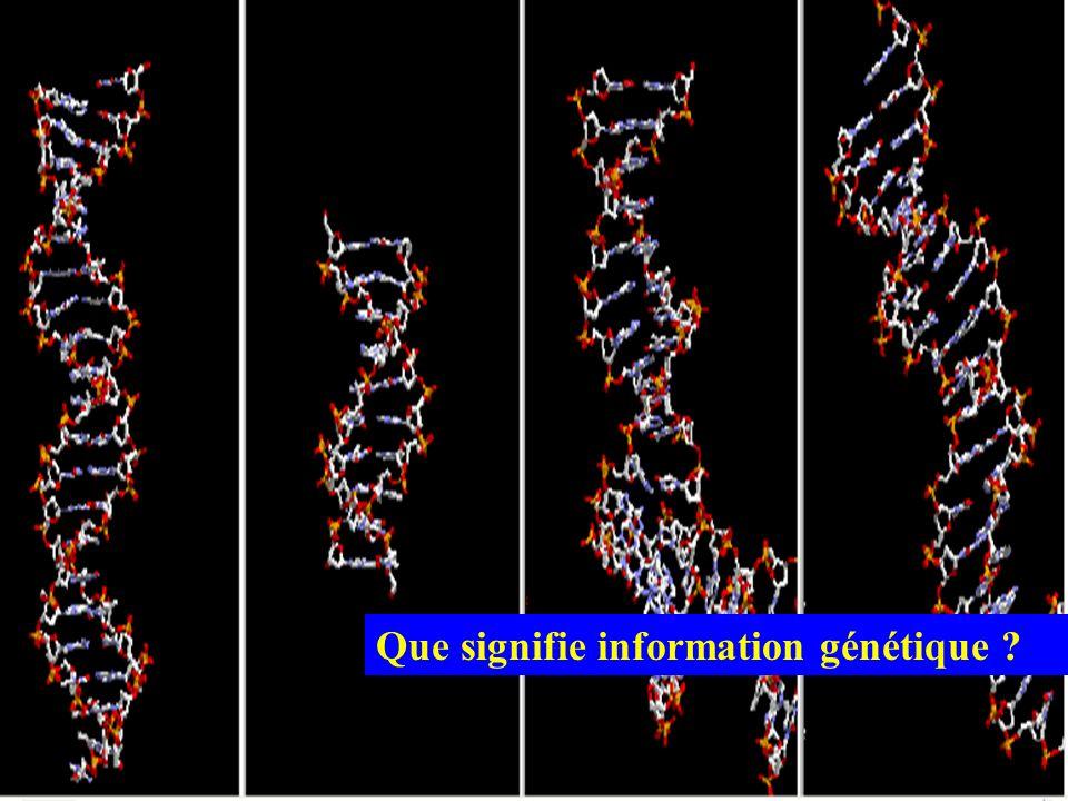 Que signifie information génétique