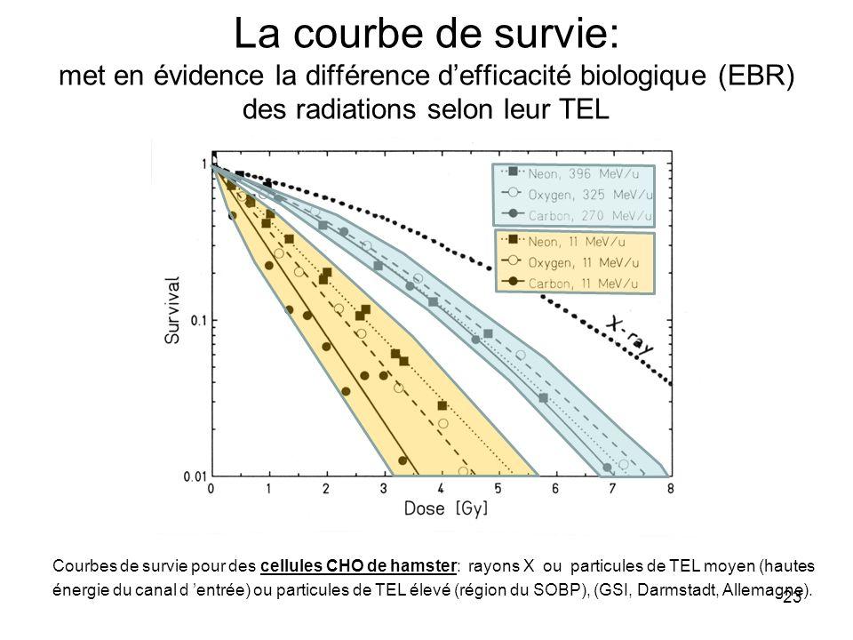 La courbe de survie: met en évidence la différence d'efficacité biologique (EBR) des radiations selon leur TEL