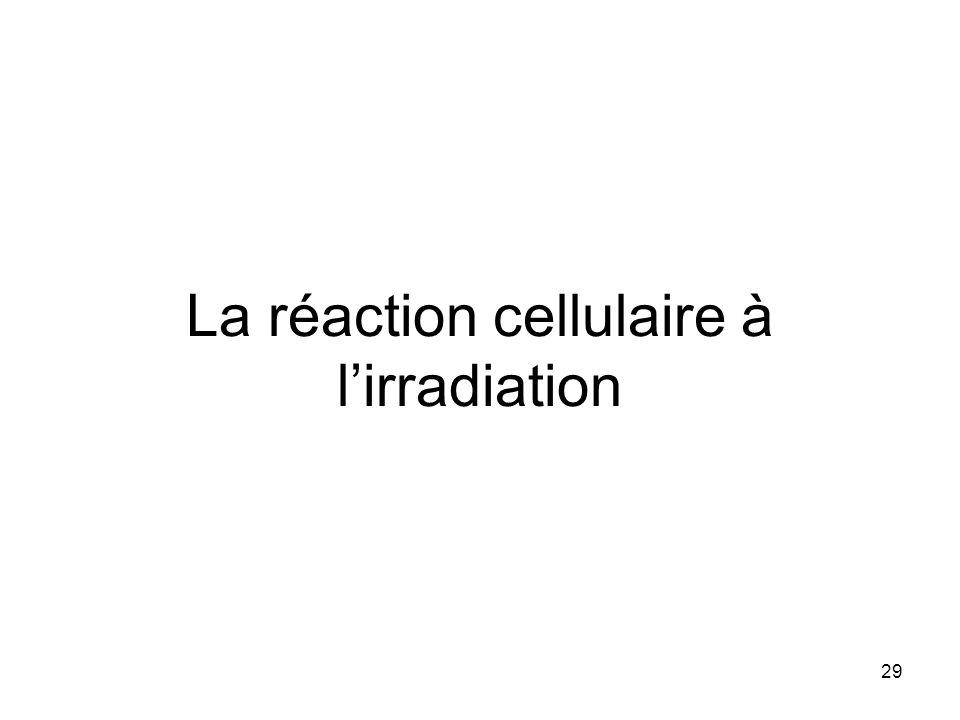 La réaction cellulaire à l'irradiation