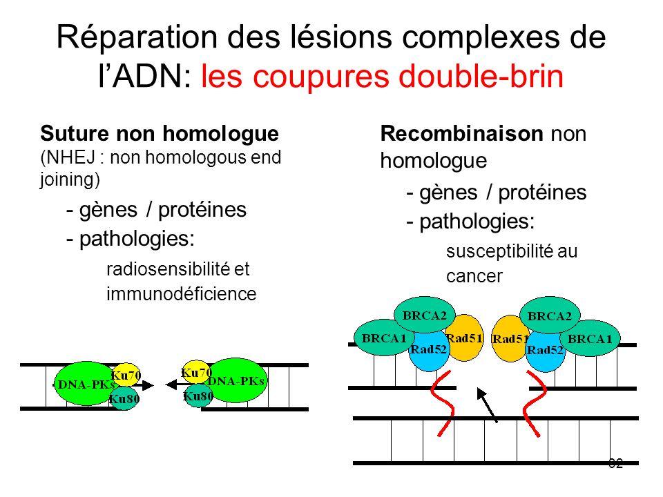 Réparation des lésions complexes de l'ADN: les coupures double-brin
