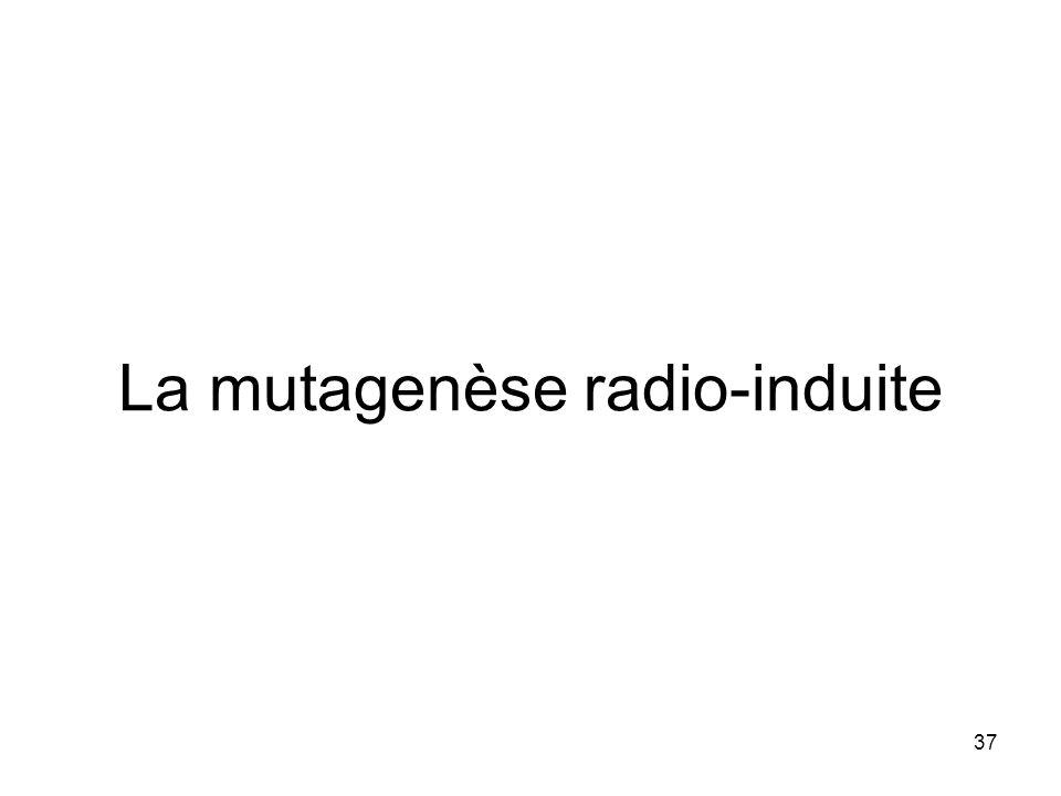 La mutagenèse radio-induite