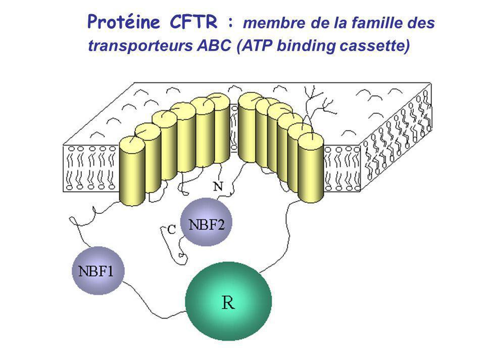 Protéine CFTR : membre de la famille des
