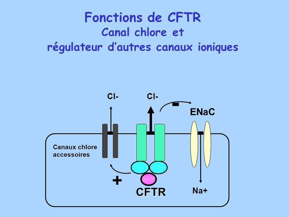 régulateur d'autres canaux ioniques